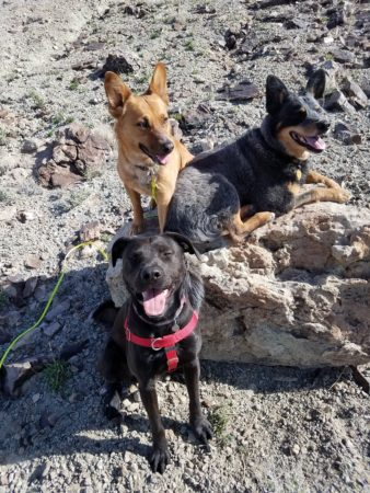 Cheri Spaulding - Rock Nest Training and Pet Care in Creswell, Eugene, and Springfield