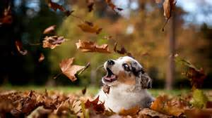 Puppy in Fall Leaves - Rock Nest Training and Pet Care